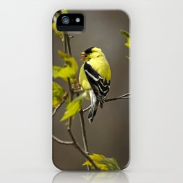 Goldfinch in Song iPhone Case