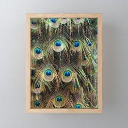 peacock III Framed Mini Art Print