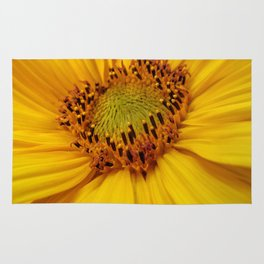 Sunflower heart Rug