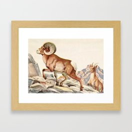 Fuertes, Louis Agassiz (1874-1927) - Burgess Animal Book for Children 1920 (Mountain Sheep) Framed Art Print