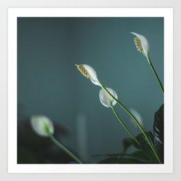 Peace Lilies Art Print