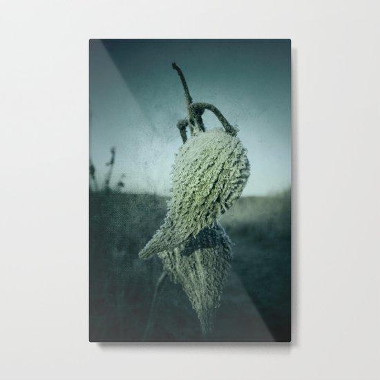 Milkweed Seed Frost Metal Print