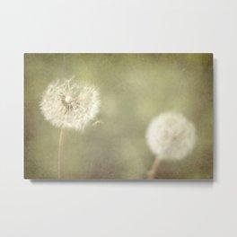 Sweet Dandelions  Metal Print