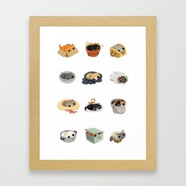 Cats Sitting On and In Things Framed Art Print
