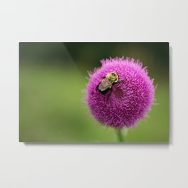 Bumble Bee on Purple Thistle Metal Print