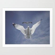 Seagull {Seven} Art Print