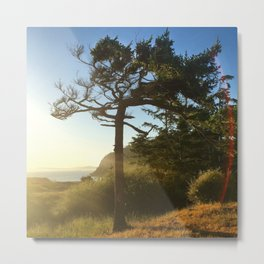 Deception Pass Devine Light Bonsai Tree Metal Print