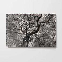 Magnolia Trees in Blossom 03 Metal Print
