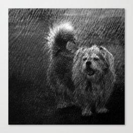 Dog in rain Canvas Print