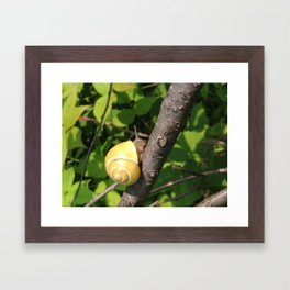 Snail of a Day Framed Art Print