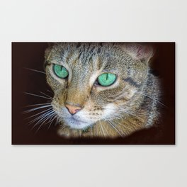 FELINE LOVE Canvas Print