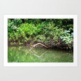 Daintree Rainforest- Reflection Art Print