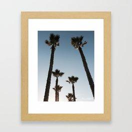 California Palms Framed Art Print