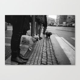 Dogs like trams Canvas Print