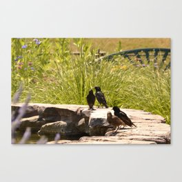 Starling Birds on Fountain Canvas Print