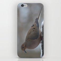 Mourning Dove iPhone & iPod Skin