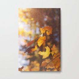 sun soaked autumn Metal Print