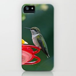 Perched Hummingbird iPhone Case