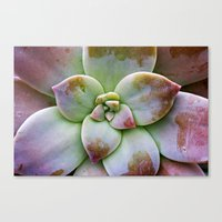 succulent Canvas Prints featuring Succulent by Lindsay Faye