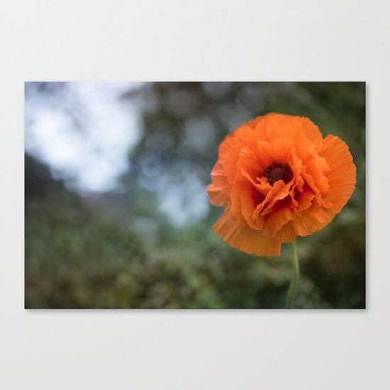 Enlightened Poppy - Poppies Flowers Flower on #Society6 Canvas Print