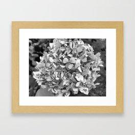 Hydrangia Framed Art Print
