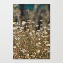 Field of Daisies - Floral Photography #Society6 Canvas Print