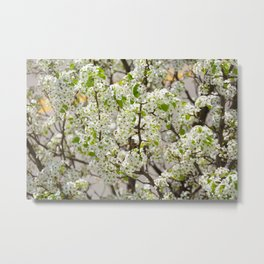 this year's blossoms Metal Print