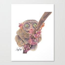 Tarsier - Bush Baby Canvas Print