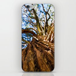 Looking Up A Tree iPhone Skin