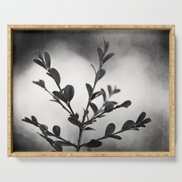 Black and White Nature Botanical Photography, Dark Grey Tree Branch, Neutral Gray Branches Serving Tray