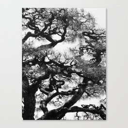 Tree of Japan (black and white edit) Canvas Print