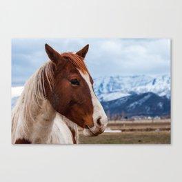 Wasatch Mountains Winter Horse - Heber - Utah Canvas Print