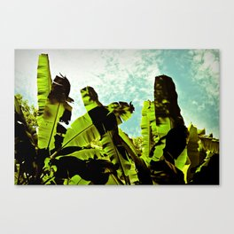 Banana Dreams Canvas Print