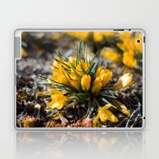 Sunlit Crocus Laptop & iPad Skin