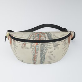 Anatomy Vintage Scientific Illustration French Language Encyclopedia Lithographs Educational Fanny Pack