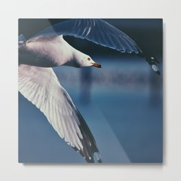 Wings Through Wind Metal Print