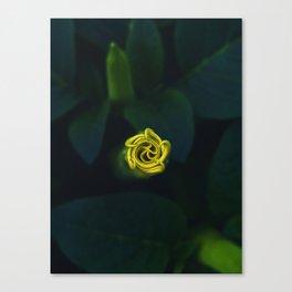 Datura innoxia Canvas Print