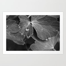 Black & White Spring  Art Print