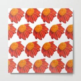Coneflower Echinacea Metal Print
