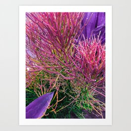 Sticks on Fire with Agave Art Print
