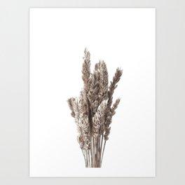 Dried Flowers Lagurus Grass Neutral Minimalist Art Print