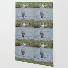 Blue Heron at Hillsboro Pond Wallpaper