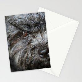 wet puppy portrait Stationery Cards