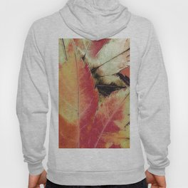 Autumn Maple Abstract Hoody