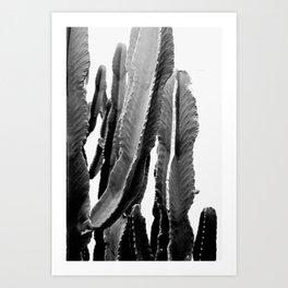 Boho Cactus Kunstdrucke