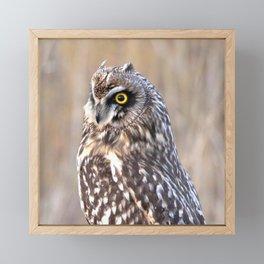 Portrait of a Short-Eared Owl Framed Mini Art Print