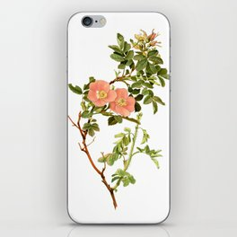 "Rosa Fendleri by Alfred Parsons (part of ""The Genus Rosa,"" published in 1914) iPhone Skin"