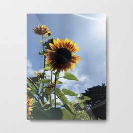 New Beginnings: Sunflowers Metal Print
