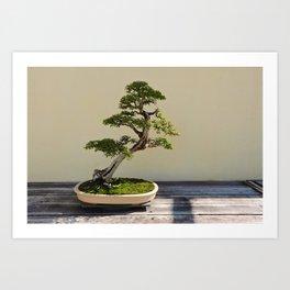 Bonsai Bonanza Art Print