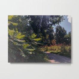 Summer walks Metal Print